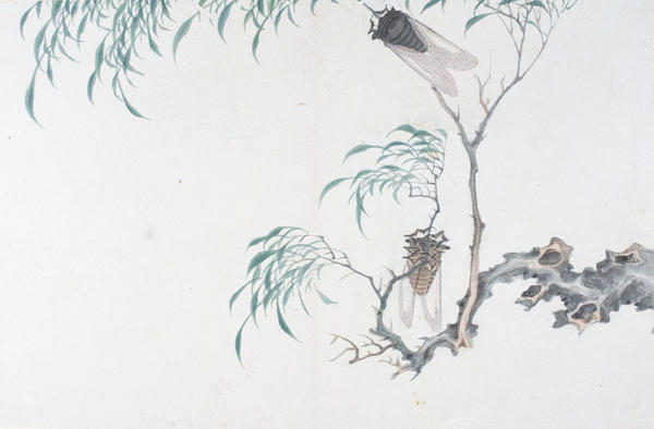 <em>Album Leaf of Flowers and Insects</em>, bequest of the Hofer Collection of the Arts of Asia, 1985.904.6