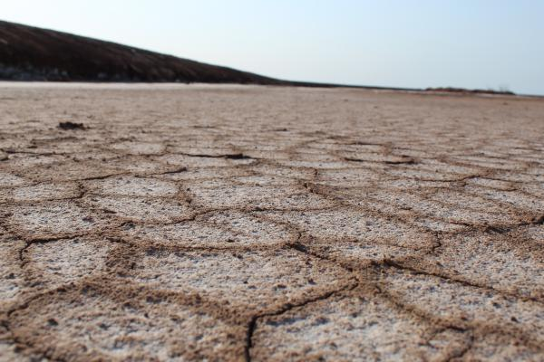 Salt-encrusted soil bakes in the sun in the Colorado River delta.
