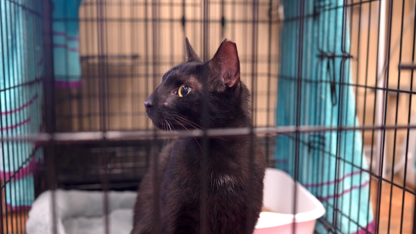 Binx the cat was reunited with his family on Friday.
