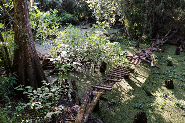 Cypress Creek, a tributary of the Hillsborough River, runs through the USF Forest Preserve, providing a wildlife corridor to other conservation lands to the East and West.