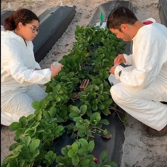 Marissa Cassaway and Joseph Montemayor at UVC field site on July 19, 2021.