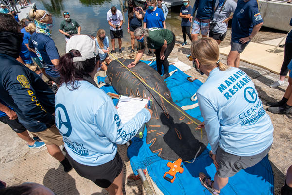 At least 841 manatees have died in waters near Florida's east coast since the start of the year. That six-month total breaks the previous record set for the entire year of 2013, when 830 manatees died.