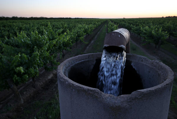 Well water is pumped into an irrigation system at a vineyard in Madera, California. California is suffering from drought, and farmers in the state's Central Valley are pumping more groundwater from their well to make up for a shortfall in water from the state's reservoirs.
