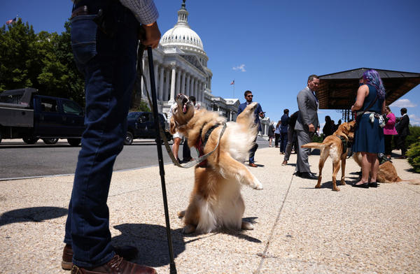 Morgan, a military service dog, stands on her hind legs for her handler before a news conference for HR 1448, Puppies Assisting Wounded Service Members (PAWS) for Veterans Therapy Act outside the U.S. Capitol on May 13.