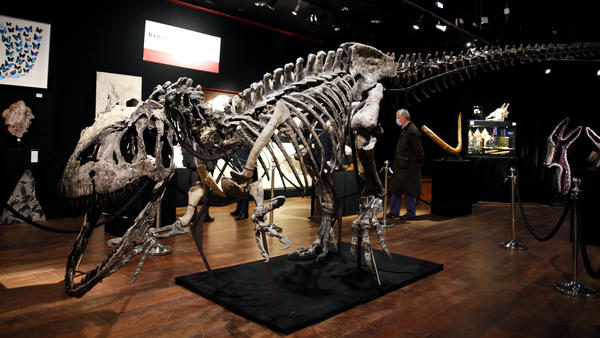 A skeleton of an <em>Allosaurus</em> on display at Drouot auction house in Paris in October. A new theory says the dinosaurs were killed by a comet fragment that originally came from the edge of the solar system.