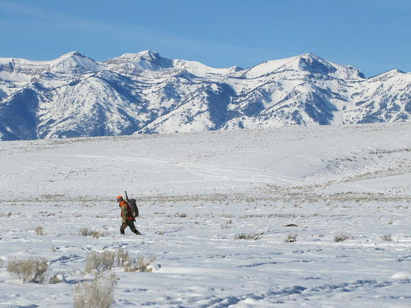 The National Elk Refuge offers hunting opportunities for both bison and elk.