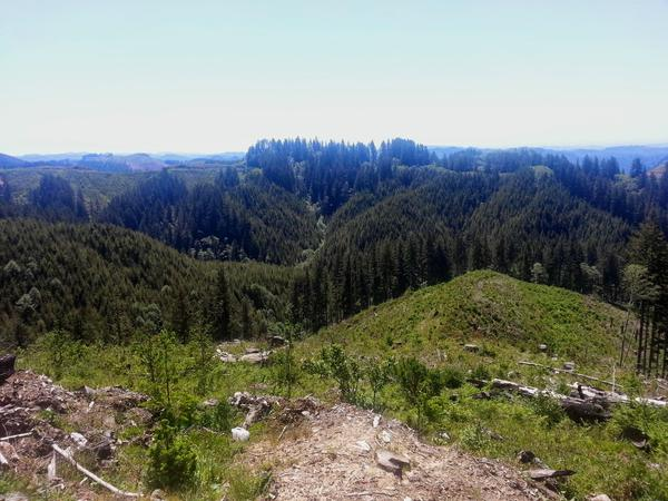 A proposal to devote the Elliott State Forest to research has hit a snag.