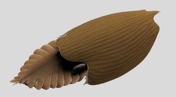 A reconstruction of the <em>Titanokorys gainesi</em>, a new species of extinct sea animal discovered in Canada.