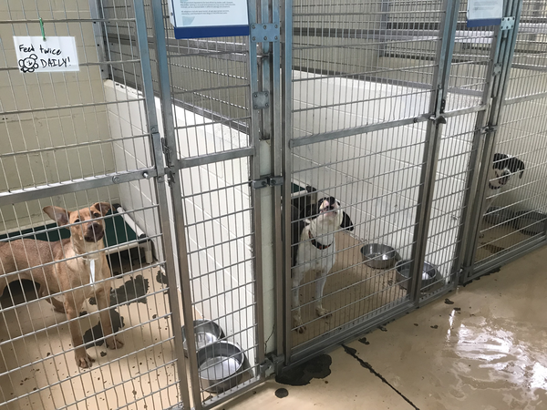 Metro Animal Shelter in Tuscaloosa, Alabama has more dogs than cages. The shelter is one of many in the Gulf South that is literally overflowing with animals due to a variety of reasons right now.