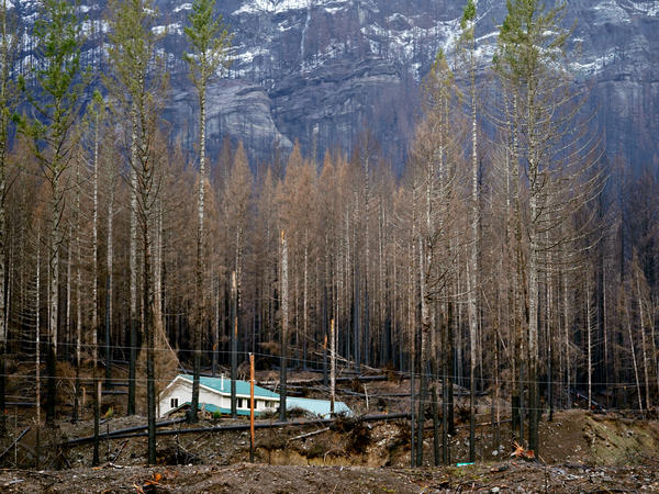 Mary Bradshaw's house in Elkhorn, Ore., in February. The fire-hardened home was one of the few that survived last year's Beachie Creek Fire in the area.