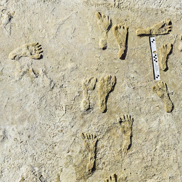 Fossilized human footprints shown at the White Sands National Park in New Mexico. According to a report published in the journal <em>Science</em>, the impressions indicate that early humans were walking across North America around 23,000 years ago.