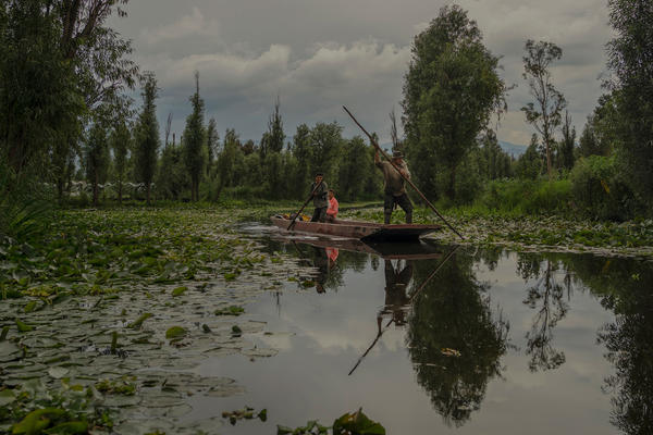 Three Mexican farmers, called <em>chinamperos</em>, navigate a <em>trajinera</em>, a small traditional boat of the area, through water canals on Xochimilco Lake, Mexico, in June.