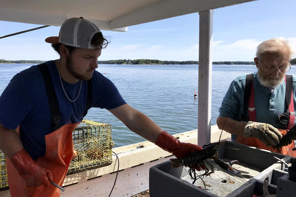 Nick Prior adds a keeper to the box for his grandfather Verge to band its claws. Nick hopes to continue the family tradition but isn't sure lobstering is sustainable as a career.