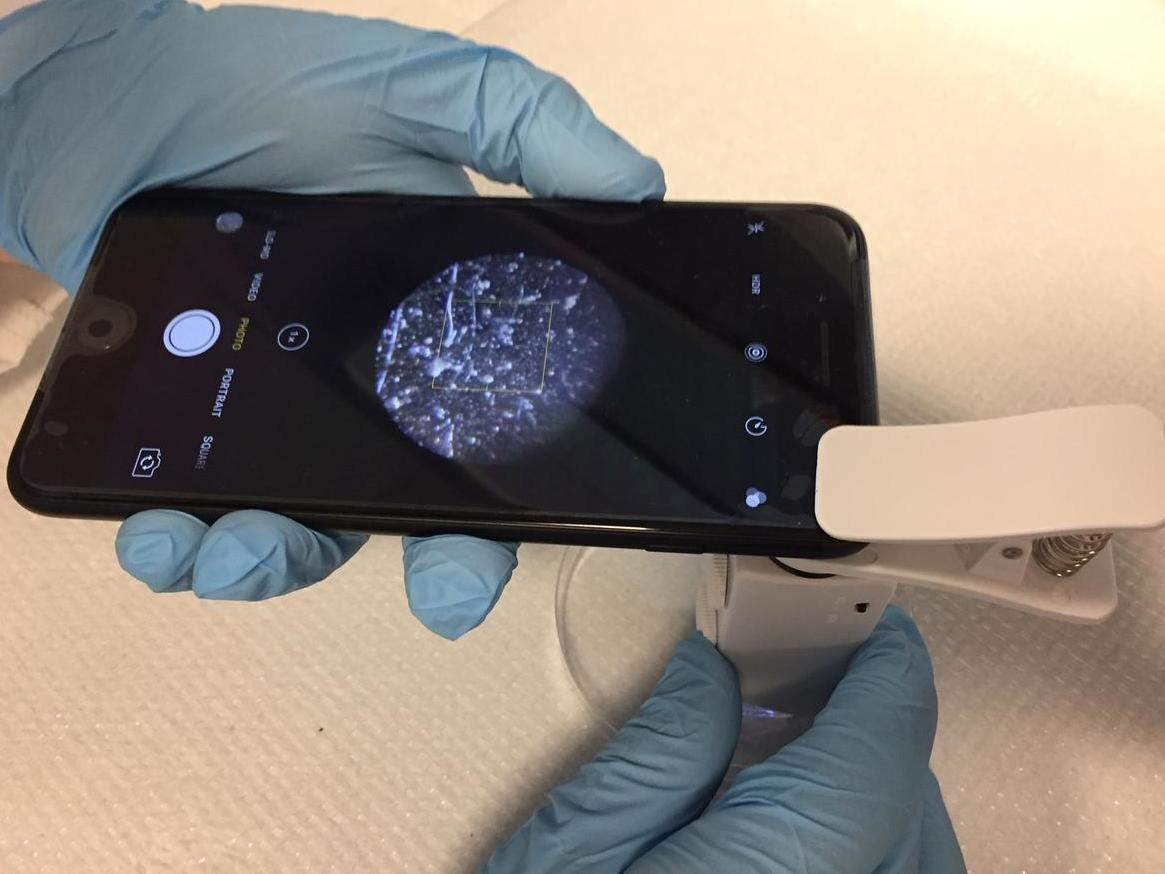 Scientists Develop A Way To Use A Smartphone To Prevent Food