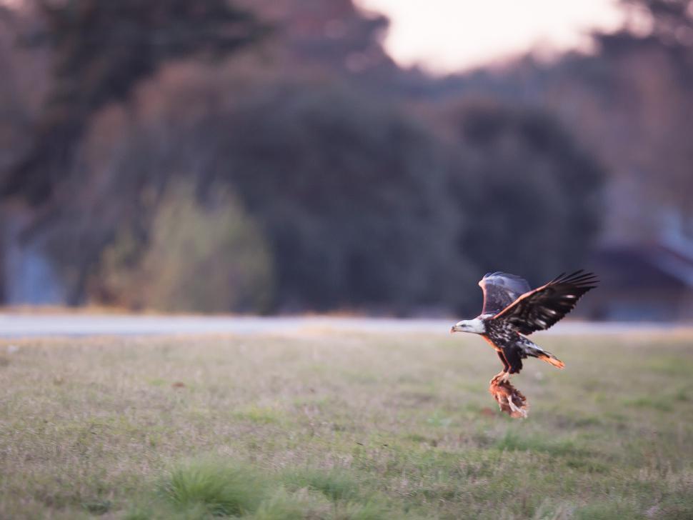 Episode 752: Eagles vs  Chickens | Georgia Public Broadcasting