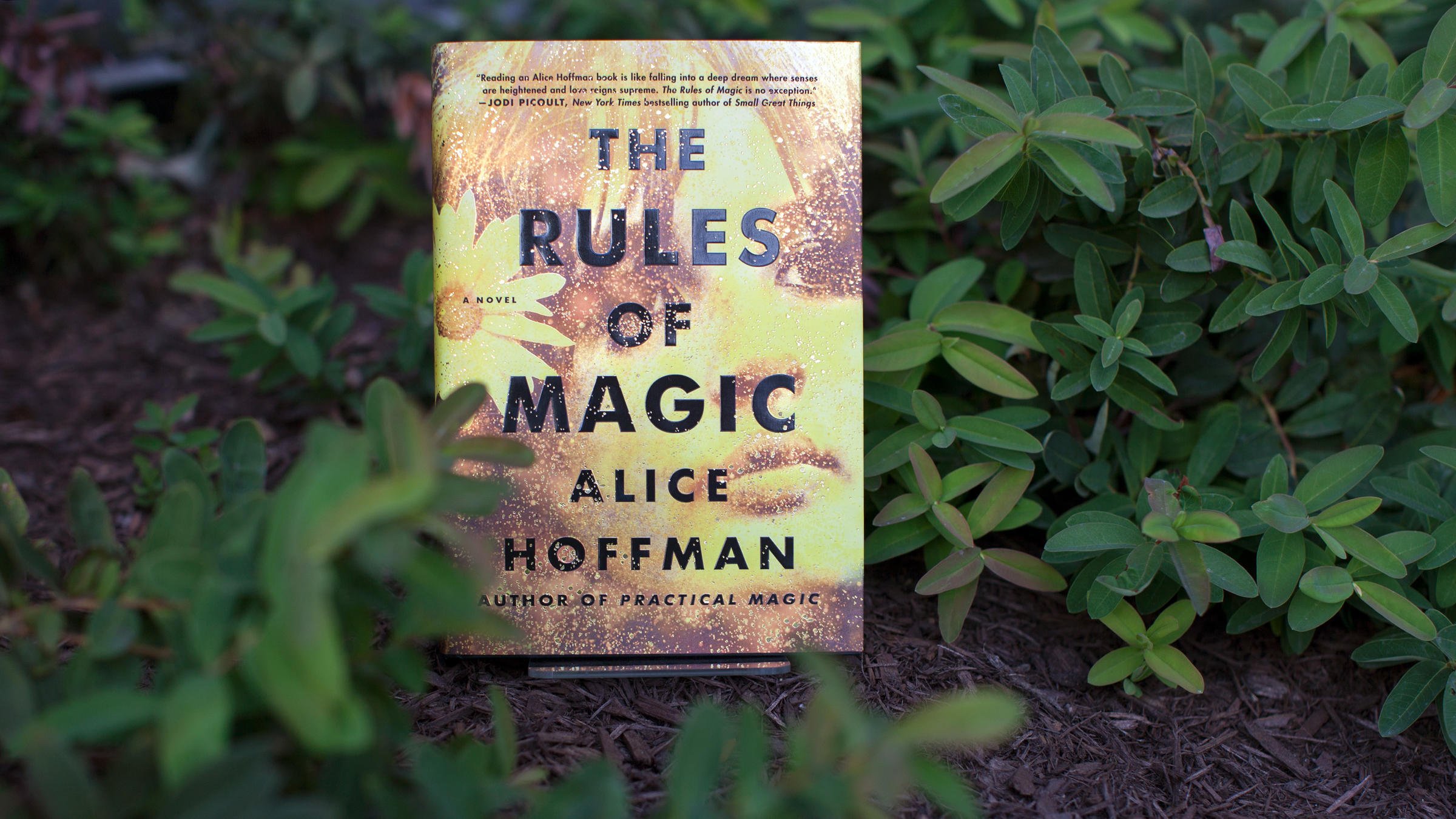In 1960s New York, Witchy Women Learn 'The Rules Of Magic