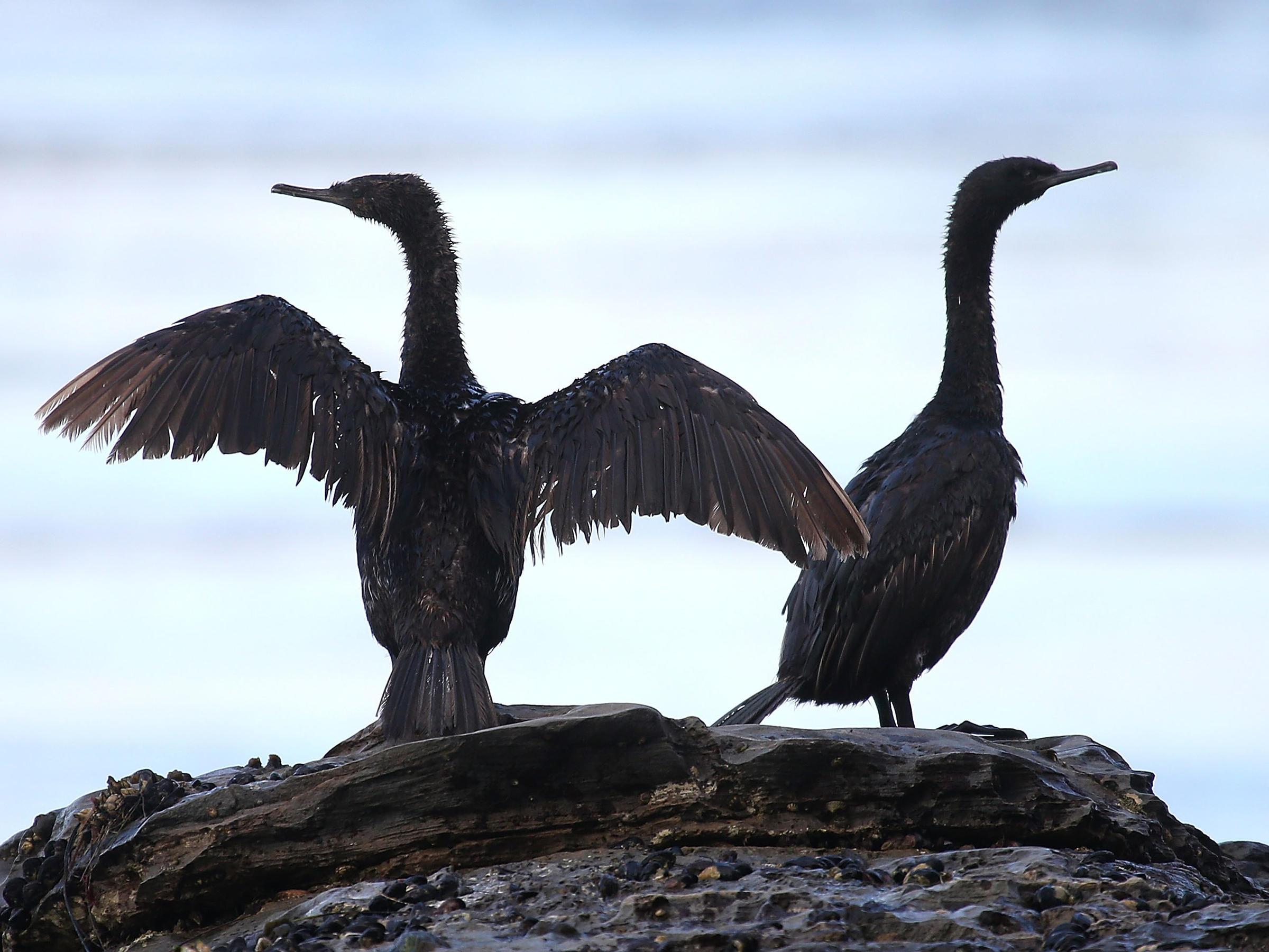 Accidentally Killing Birds Isn't A Crime, Says Trump