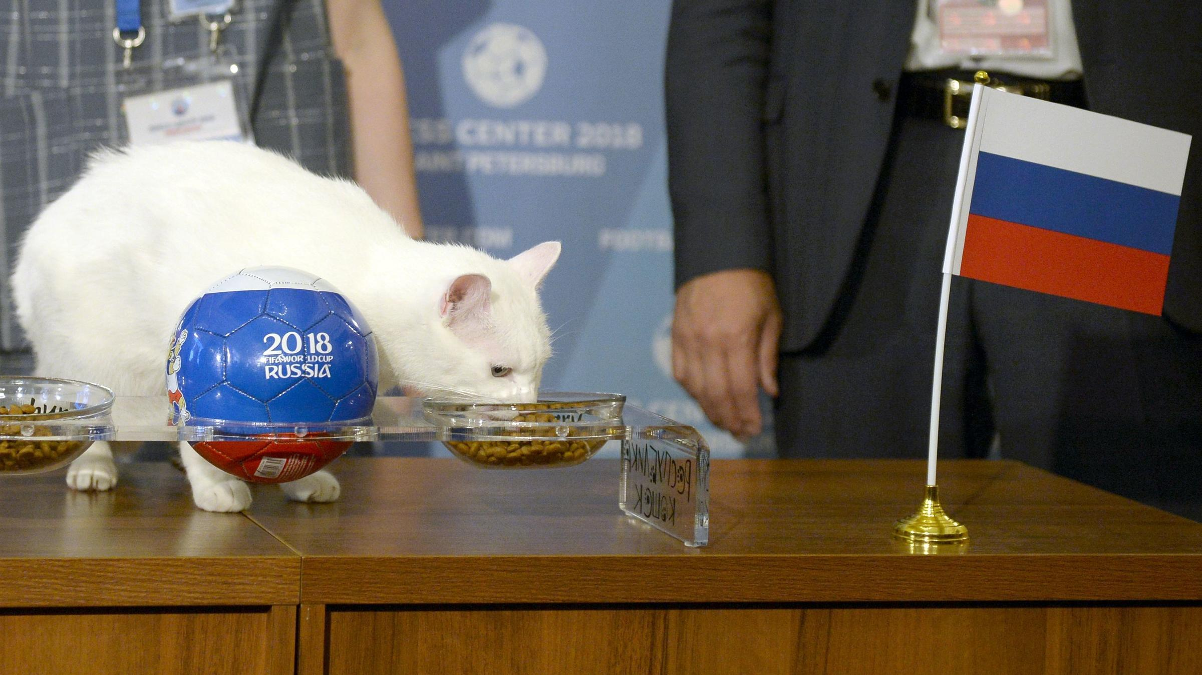 Achilles the cat predicted Wednesday that Russia would win its game against Saudi Arabia. He's been training hard as an official animal psychic.