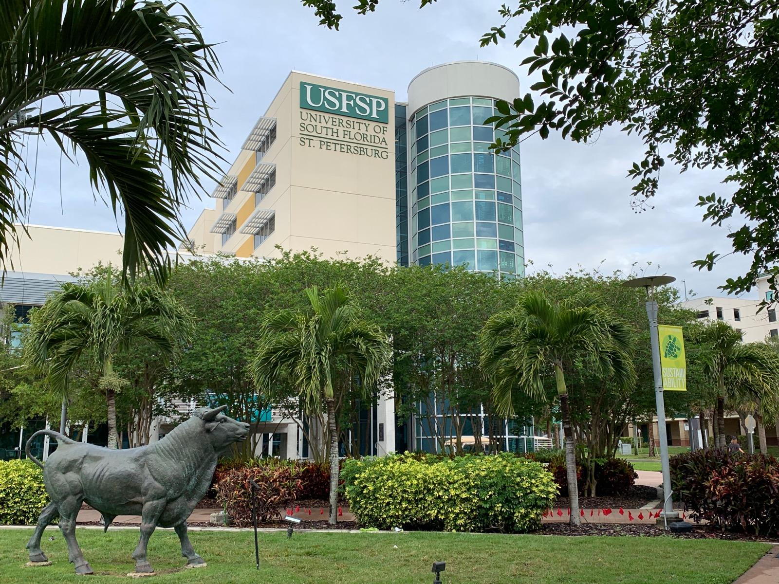 Image result for University of South Florida