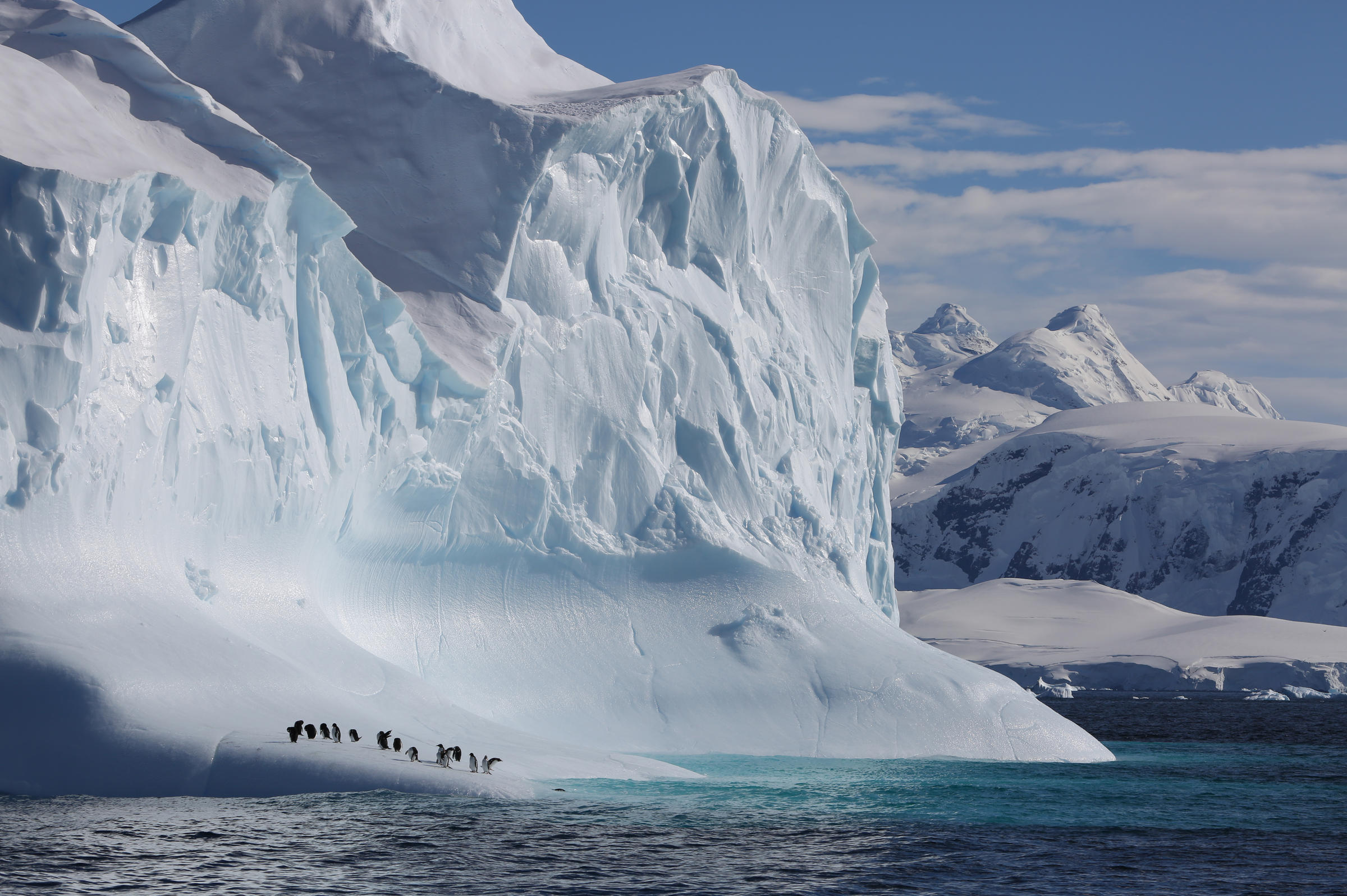 Our Planet' Nature Documentary Addresses The 800-Pound