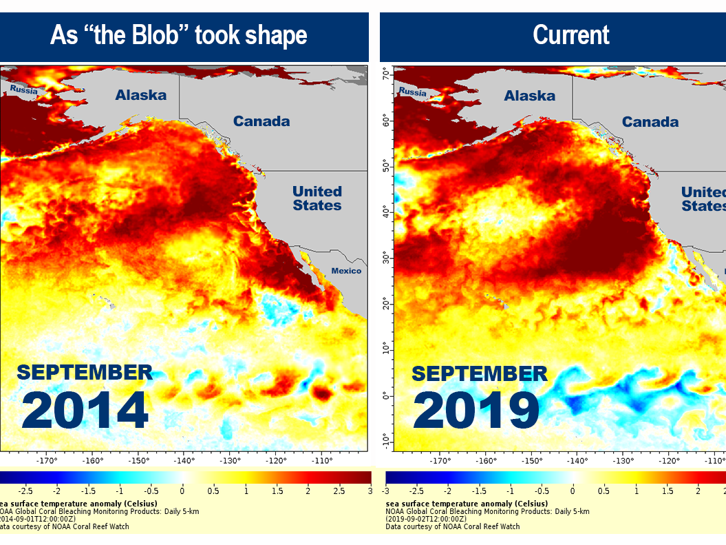 Is 'The Blob' Back? Latest Marine Heat Wave Could Pose New