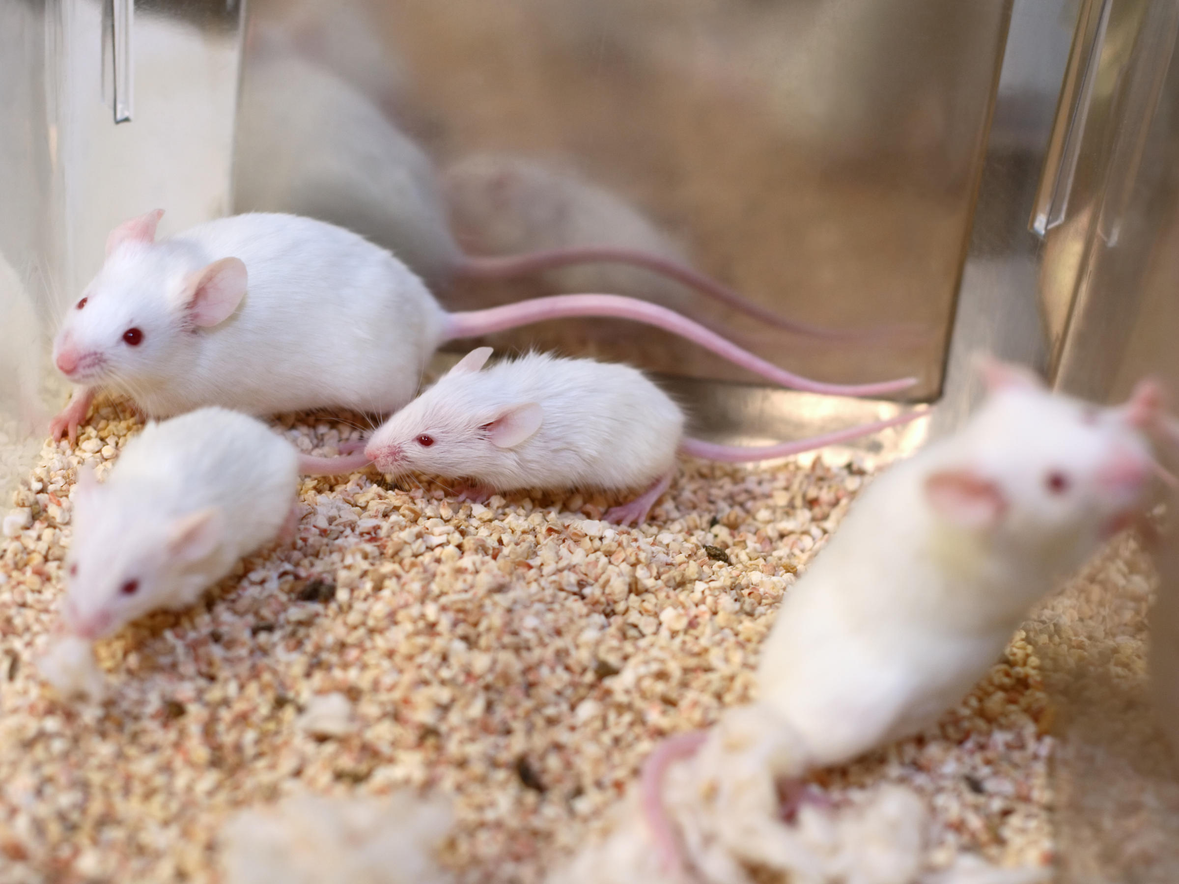 EPA Chief Pledges To Severely Cut Back On Animal Testing Of Chemicals