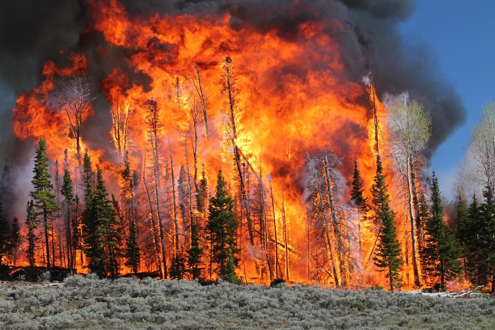 Burning Questions Researchers To Ignite A Utah Forest To Study Fire And Smoke Wyoming Public Media