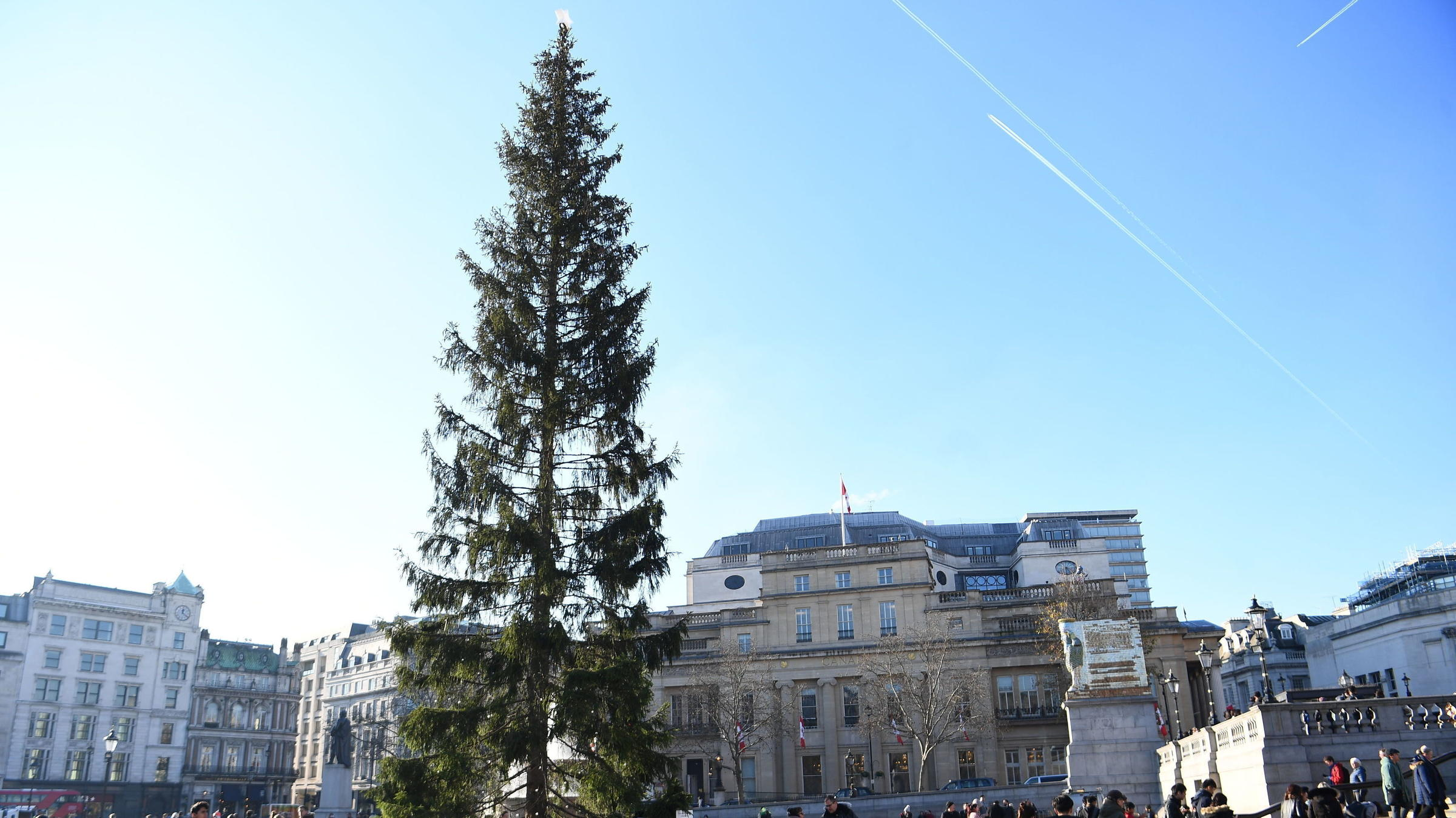 London's 'most ridiculed' Christmas tree is switched on in Trafalgar Square
