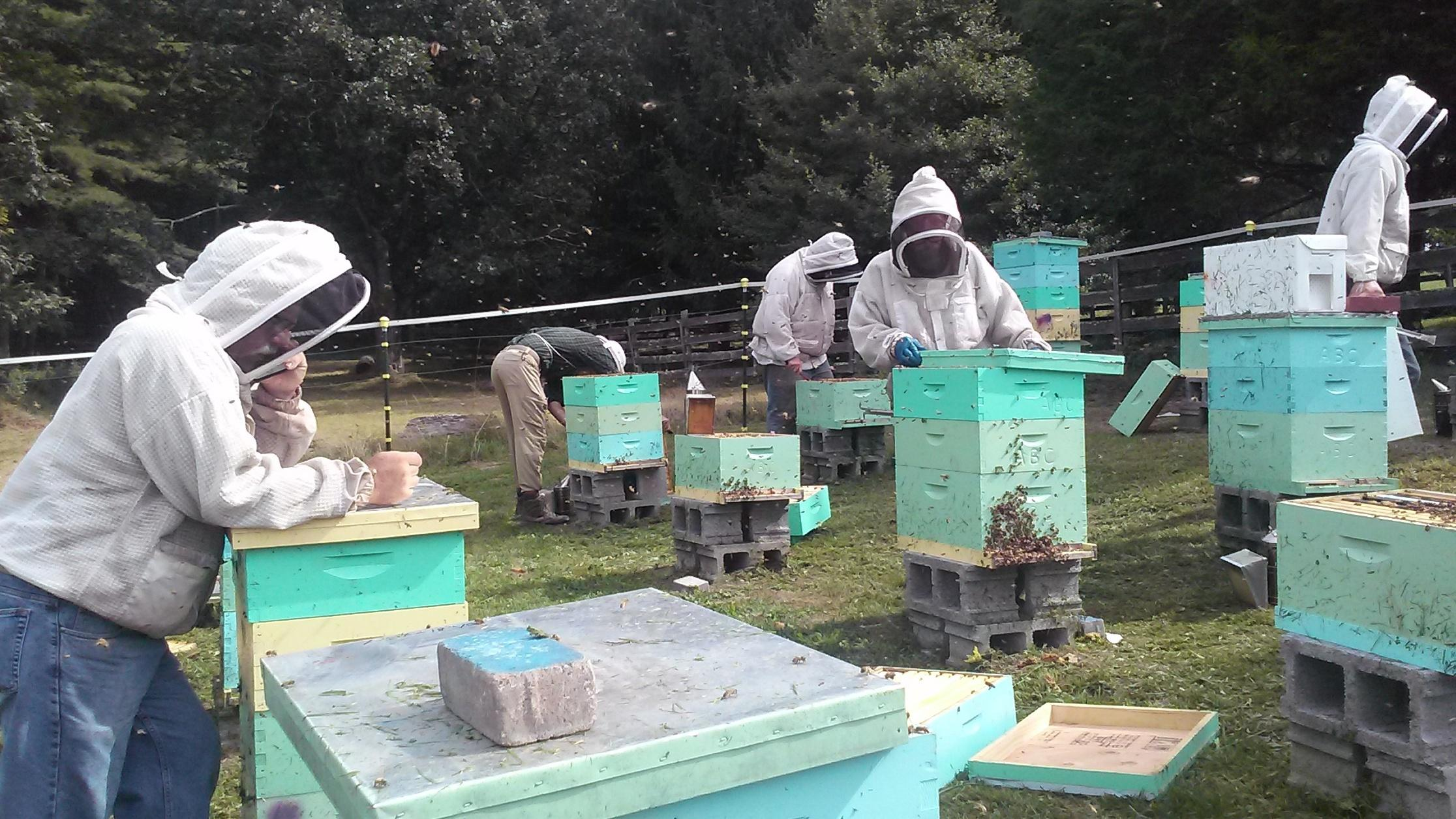 Out Of Work Appalachian Coal Miners Train As Beekeepers To Earn