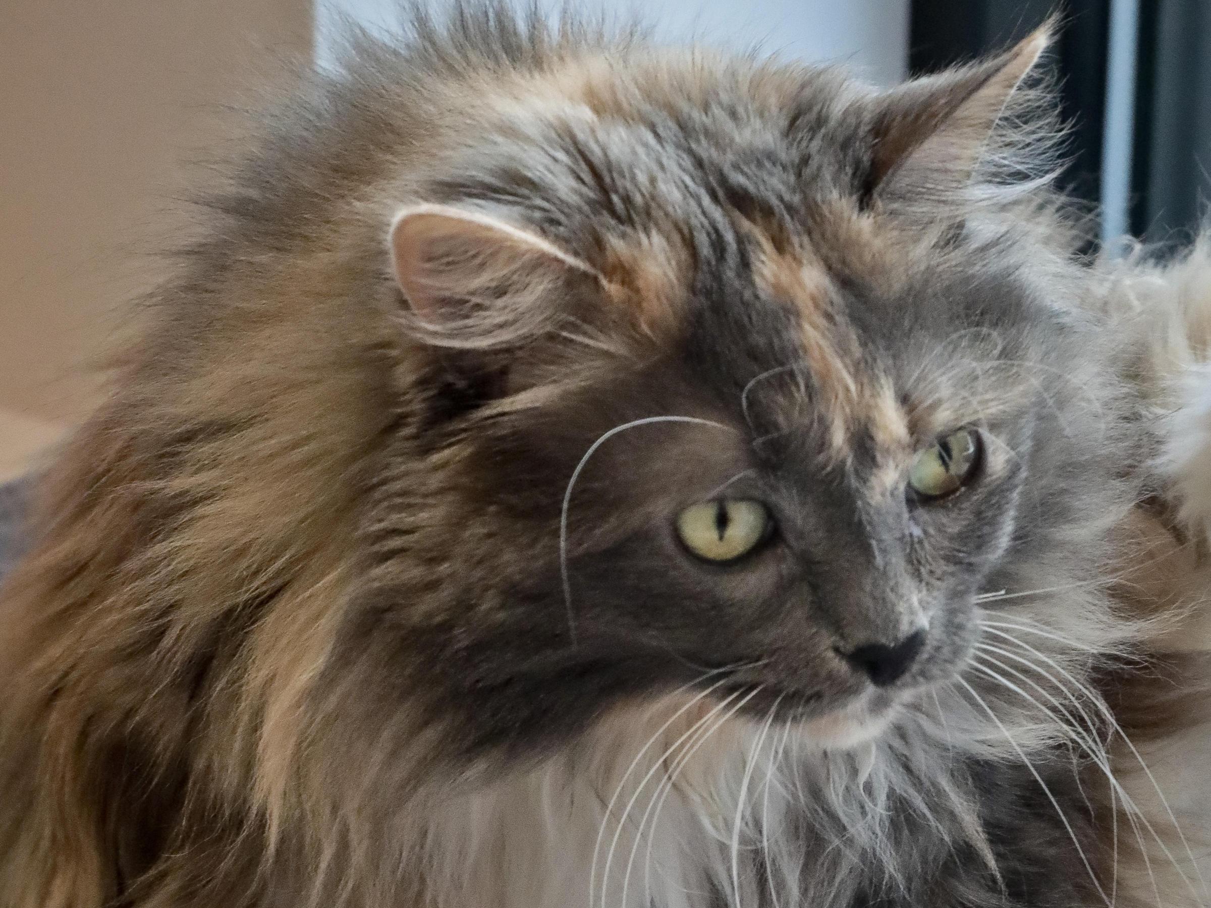 Cats Can Keep Their Claws New York Bans Declawing South Carolina Public Radio