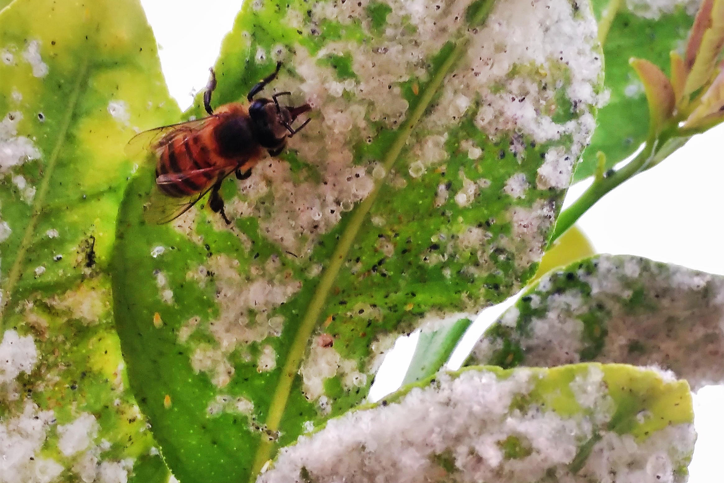New Evidence Shows Popular Pesticides Could Cause Unintended Harm To  Insects | HPPR