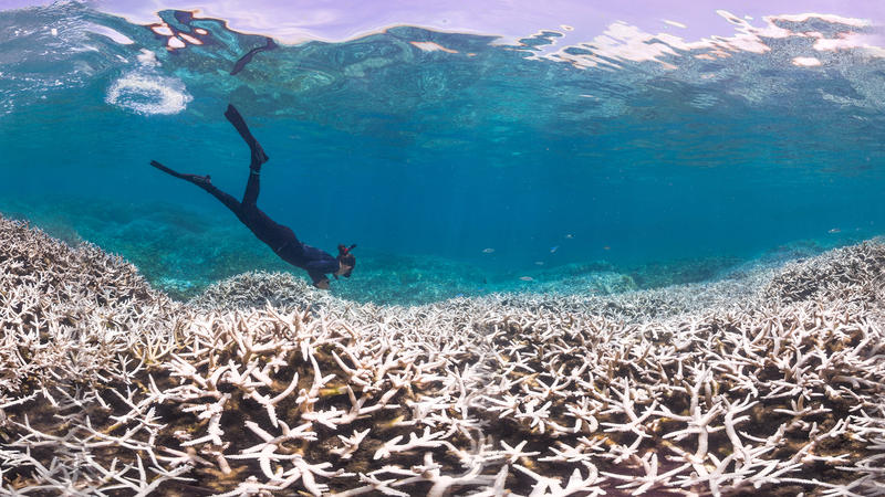 <p>Marine biologist Alice Lawrence assesses coral bleaching at Airport Reef in American Samoa. Corals are currently experiencing a global bleaching event that couldlead to the death of five percent of the world's reefs.</p>