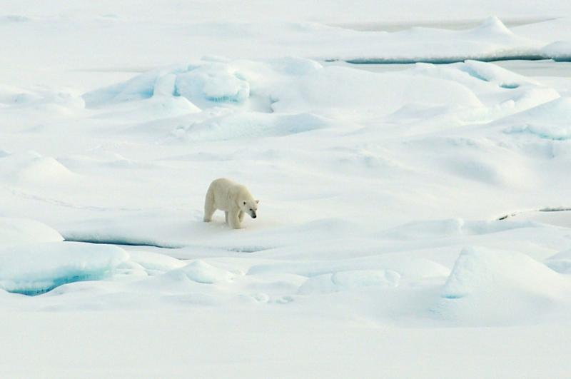 Climate Change Upends Ecosystems From Pole To Pole