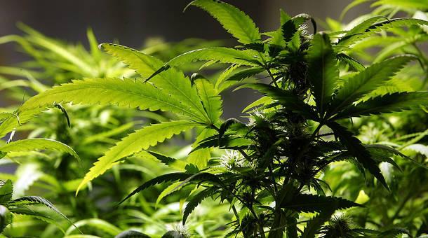 marijuana_2.jpg