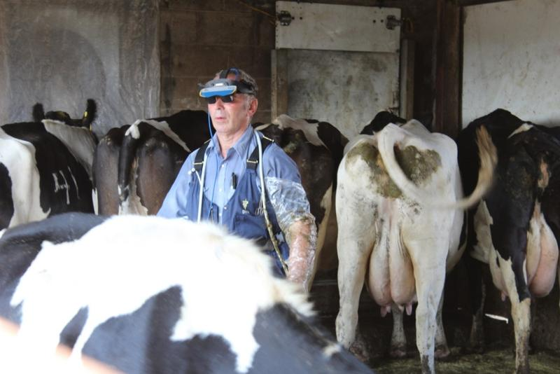Farm veterinarian Tom Troxel performs ultrasounds on a herd of dairy cows in Pulaski County. (Annie Ropeik/IPB News)
