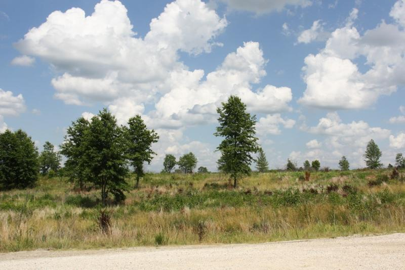 Restored oak savannah at the Columbia Mine Preserve in Patoka National Wildlife Refuge. The dead, brown bushes scattered throughout are invasive species that have been treated with herbicide. (Abby Perfetti/Sycamore Land Trust)