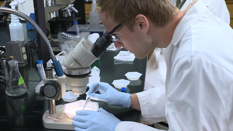 Students in Keith Clay's lab at Indiana University are working to develop a system that helps determine if it will be a bad year for mosquito and tick-borne diseases in Indiana. (Zach Herndon/WTIU)