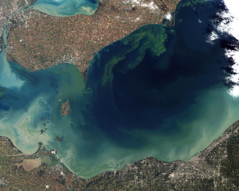 The green scum shown in this October 2011 satellite photo shows the worst algae bloom Lake Erie has experienced in decades (Jesse Allen and Robert Simmon/NASA Earth Observatory)