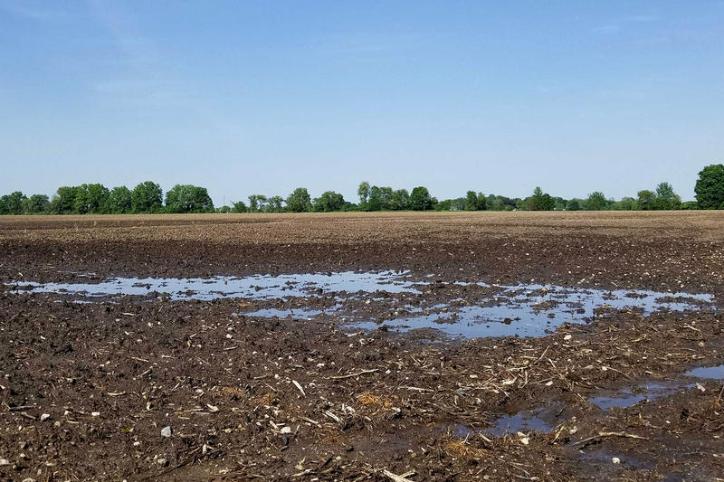 The rains have been preventing many farmers from being able to plant corn. (Samantha Horton/IPB News)
