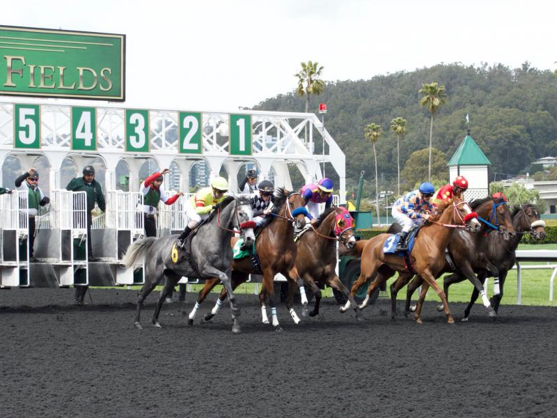 Horses sprint out of the gate during a race at Golden Gate Fields in May.