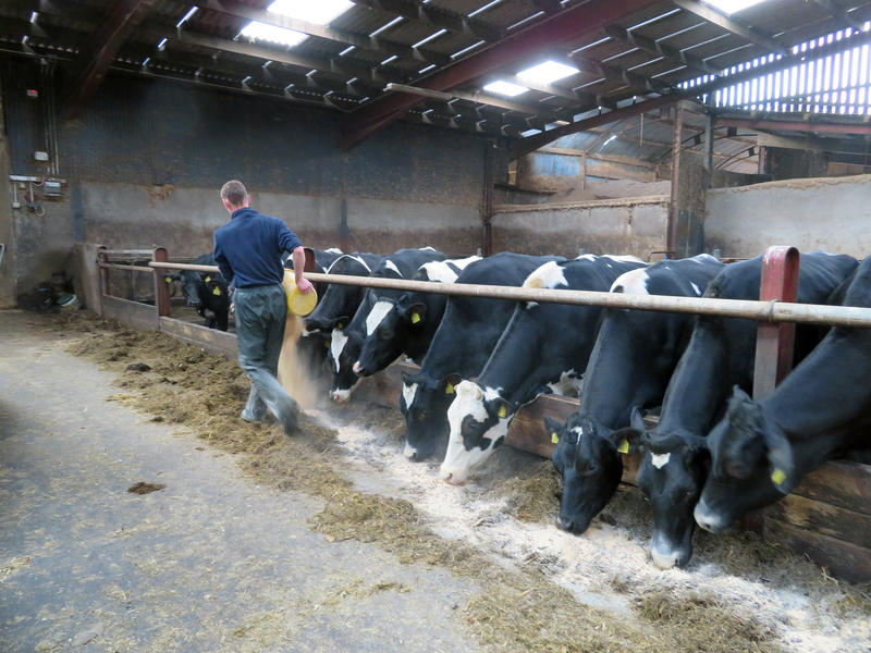 James Toner feeds cows at his family's dairy farm in Northern Ireland's County Armagh. Thirty-five percent of Northern Irish milk is sold to Ireland. Northern Irish farmers who have built lucrative cross-border trade with the Irish Republic are especially