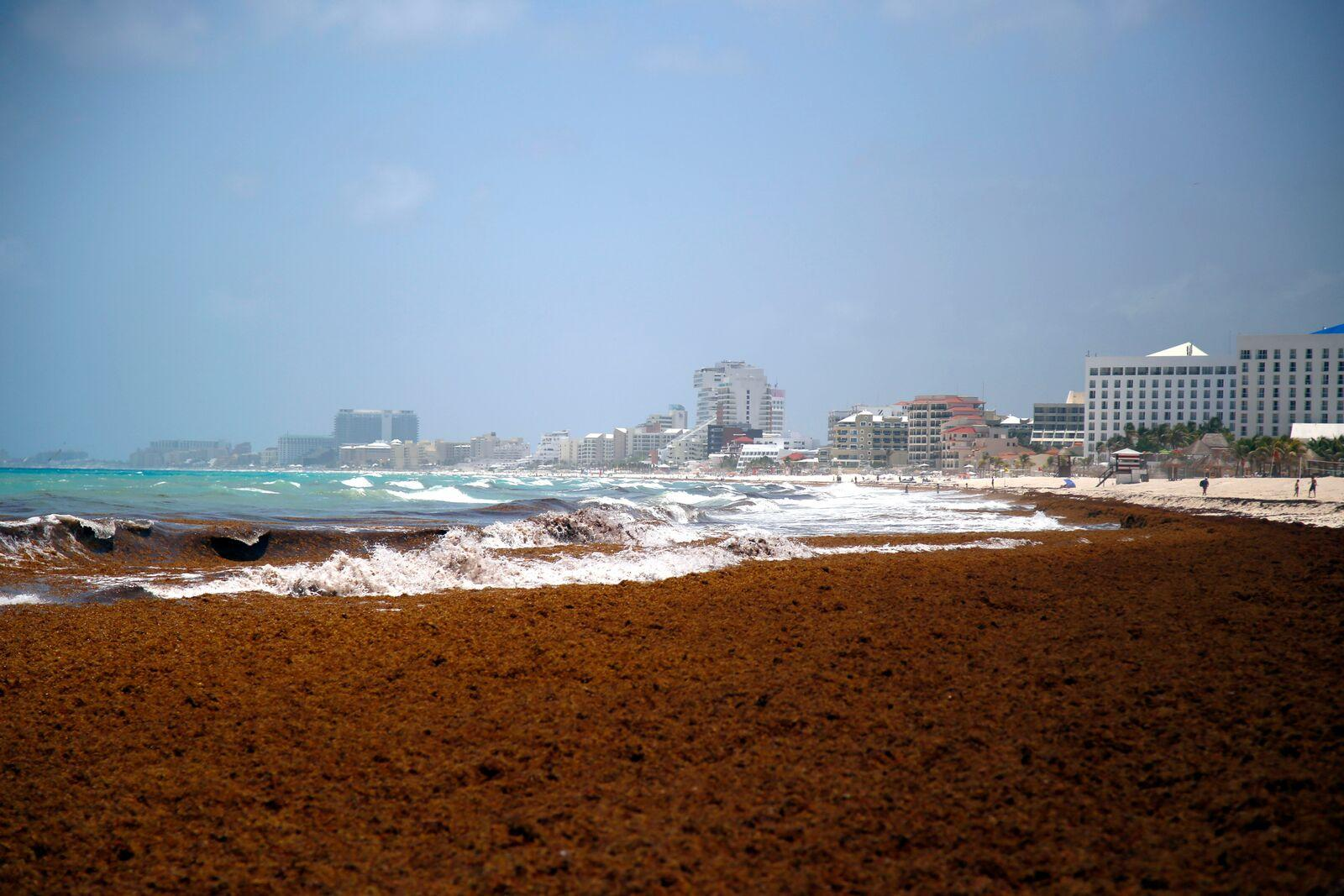 Smelly seaweed assaults, blankets Caribbean beaches | WLRN