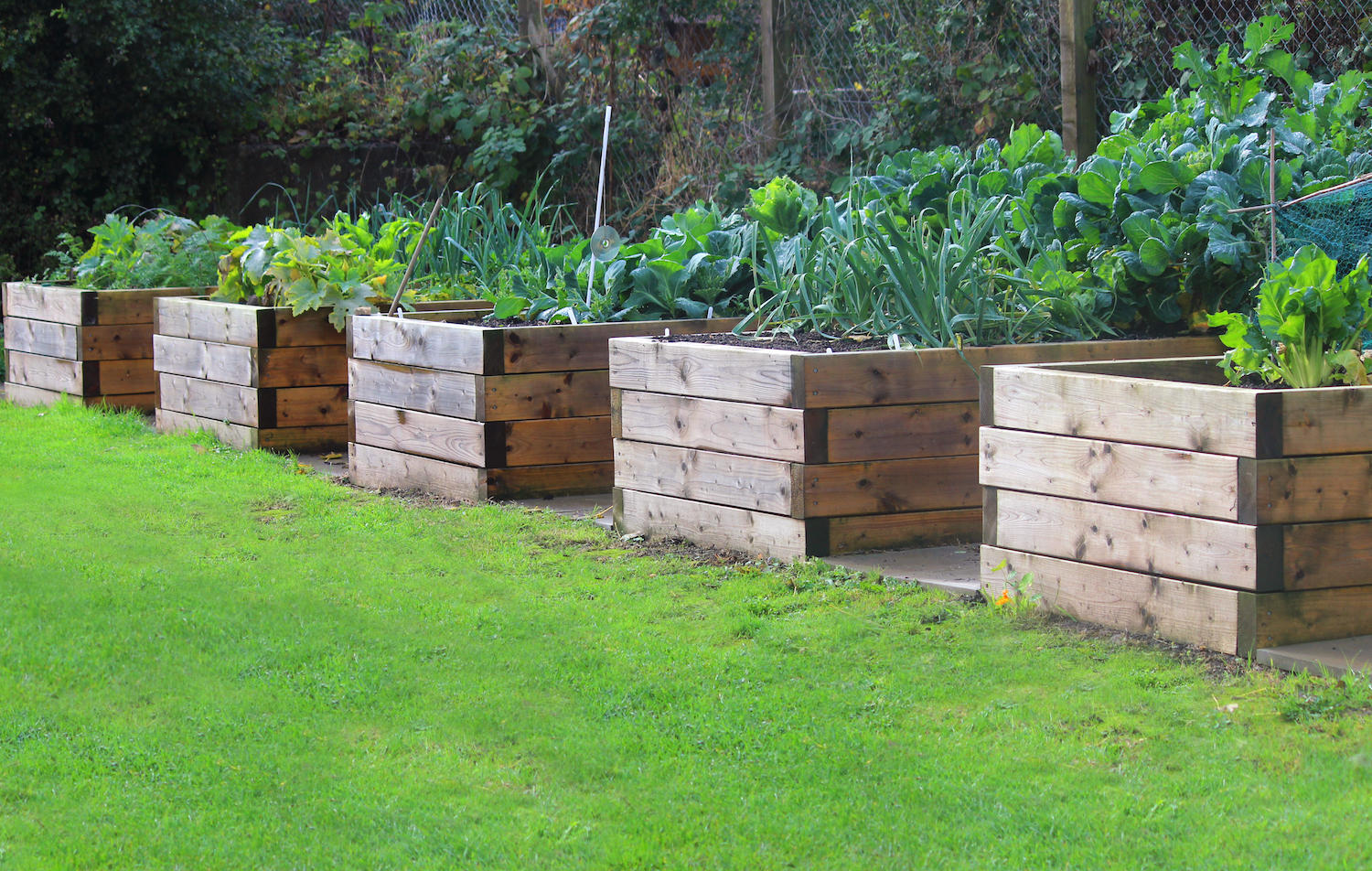 Use Wood Stone Brick Logs Or Concrete To Make Your Raised Bed If You Choose Something That S Rot Resistant Like Cedar Composite