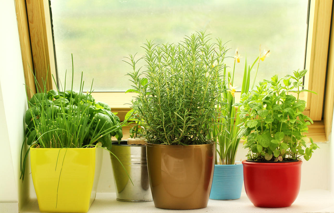 Growing Herbs Indoors Not Only Provides Ings For Cooking But Also Emotional And Psychological Relief From Winter S Gloom
