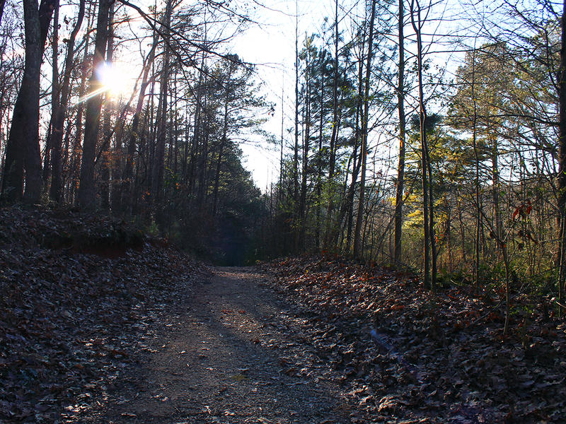 A dirt trail off the South Peachtree Creek Trail