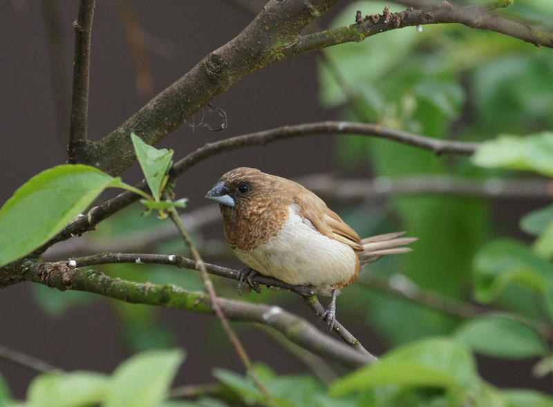 Song birds' brains can give insight into human's brains, too.