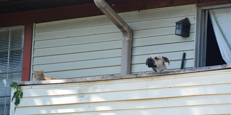A resident's two pets share the balcony of a dilapidated building in Brannon Hill.