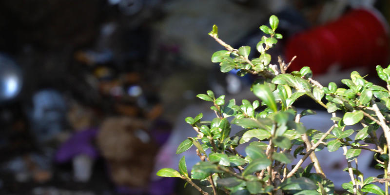 Amid the piles of trash and burned buildings, a small bush grows.
