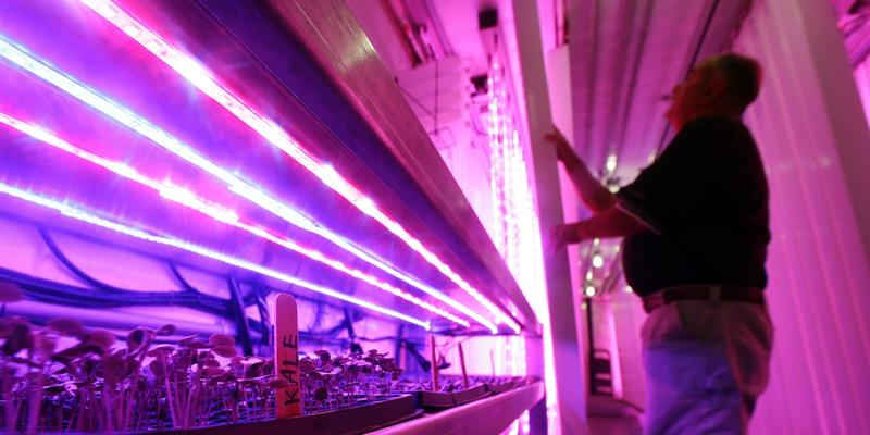 Don Holman, an engineer at the U.S. Army Natick Soldier Research, Development and Engineering Center in Natick, Massachusetts, adjusts a vertical rack under LED grow lights as kale and other lettuces sprout inside a refurbished shipping container.