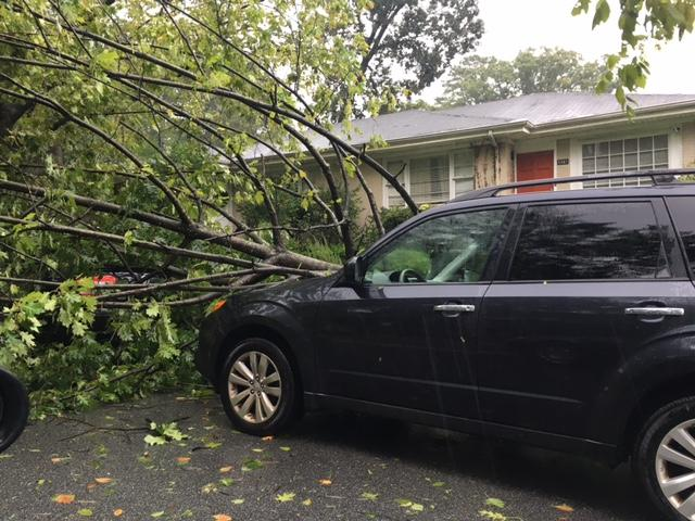 Tropical Storm Irma took trees down across metro Atlanta, including this one in Morningside. In some areas, including Decatur's Medlock Park, residents were quick to lend their neighbors a helping hand.